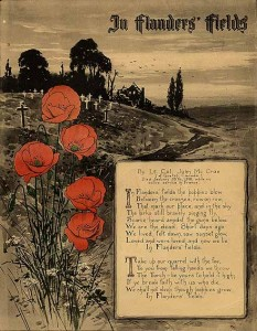 Poppies - Flanders Fields