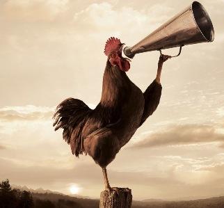 crow with megaphone